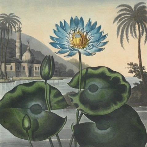 detail of watercolour of blue lotus flower blooming in a lake