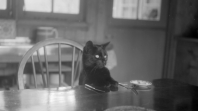 Black and white photo of a cat sitting at a table