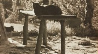 Cat lying on stool, Sonning, Bickleigh Vale