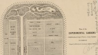 Plan of the experimental gardens of the Horticultural Society of Victoria, survey paddock, Richmond, c 1860