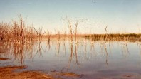 South Swamp, Sunraysia, 1970, photo from State Rivers and Water Supply Commission