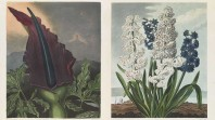 Robert Thornton's 'Temple of Flora', printed by T Bensley, London, 1807