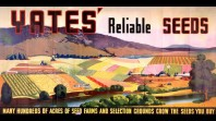 Yates' Reliable Seeds, c 1930