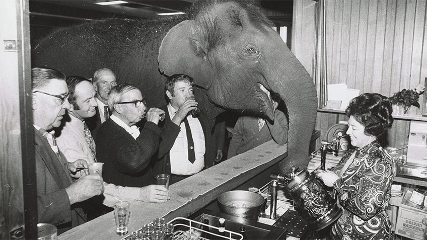 public bar with men drinking and barmaid serving an elephant water from a tankard
