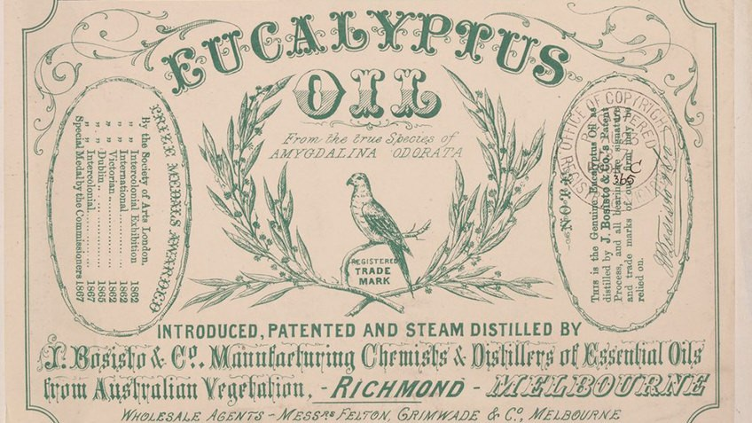 sepia label with green text for Eucalyptus Oil with parrot logo