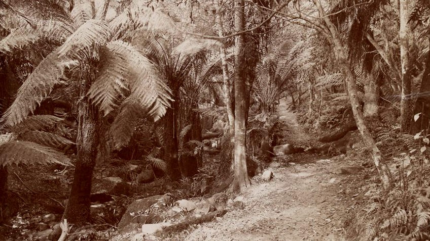 Sepia photograph of ferns and bushland in Dandenong Ranges