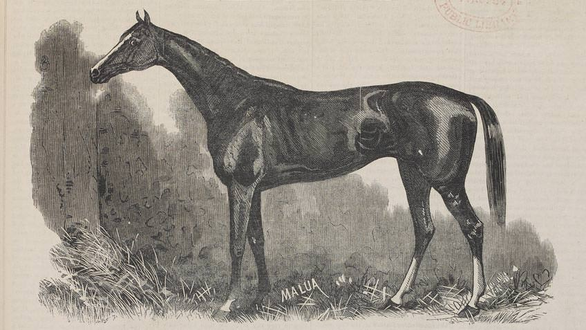 Wood engraving of the Melbourne Cup 1884, from the 'Illustrated Australian News'