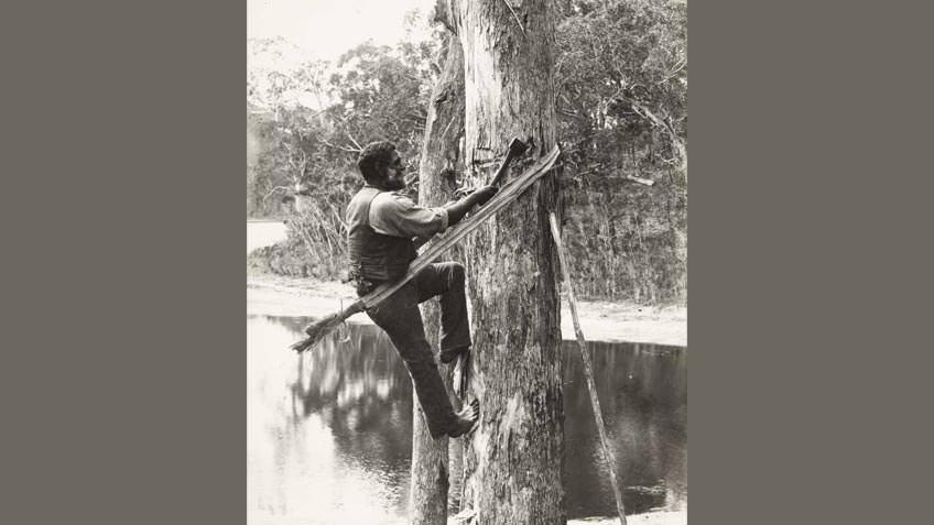 Lake Tyers man cutting a bark canoe, 1913–16