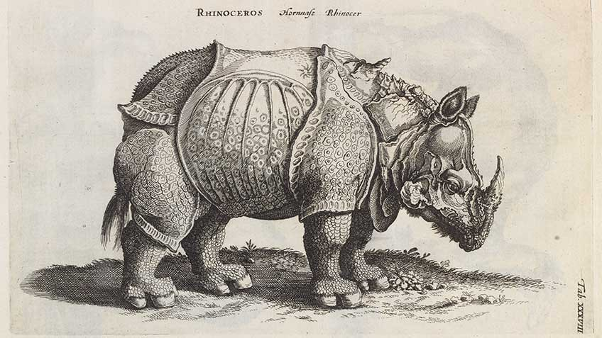 'Historiae naturalis de quadrupedibus', by Joannes Jonstonus