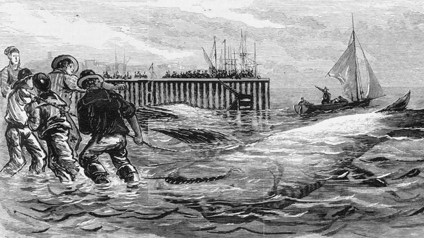 Engraving of fishermen hauling a large shark onto shore