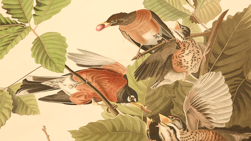 Lifelike painting of birds among foliage