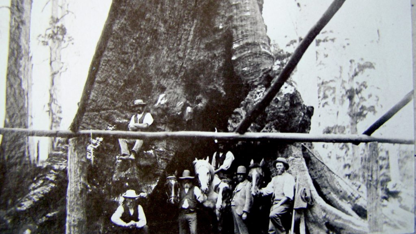 Black and white photo of six men and two horses standing by a large tree