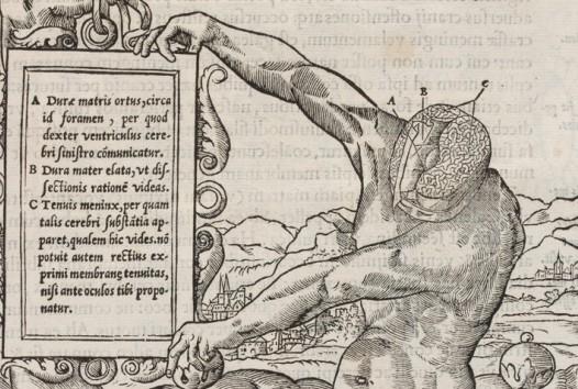 medieval anatomical image