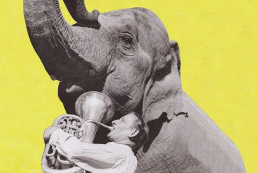 man with tuba and an elephant