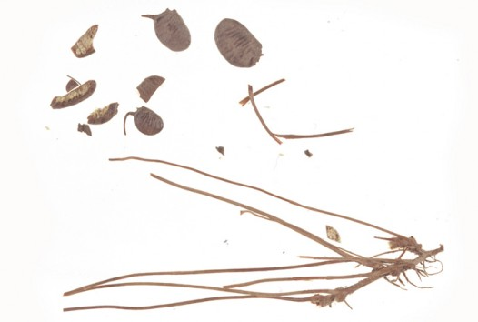 seeds and twigs